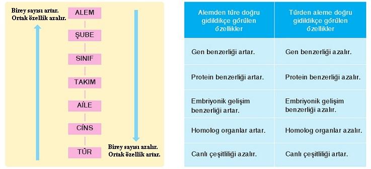 Acil durum tipleri, özellikleri ve sınıflandırılması