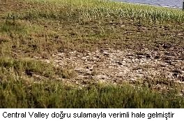 central valley projesi