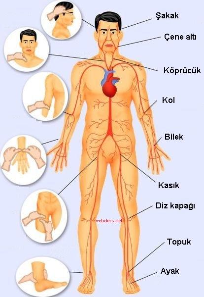 vücut baskı noktaları