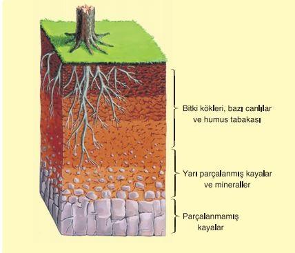 Çevrenin Abiyotik Faktörleri ve Canlılar Üzerindeki Etkileri